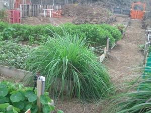 Kona Natural Farm