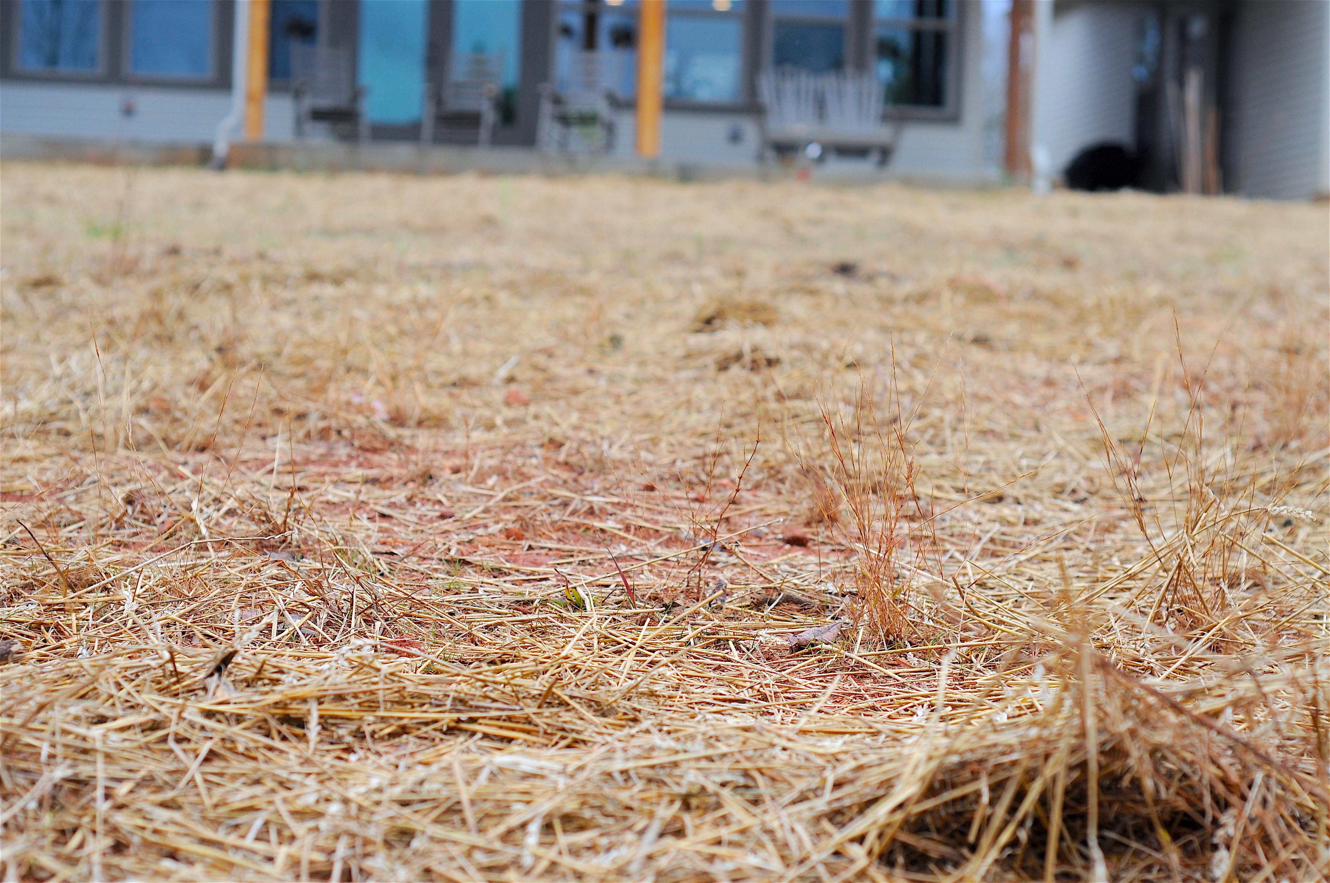 dsc_0685-jpg-hay