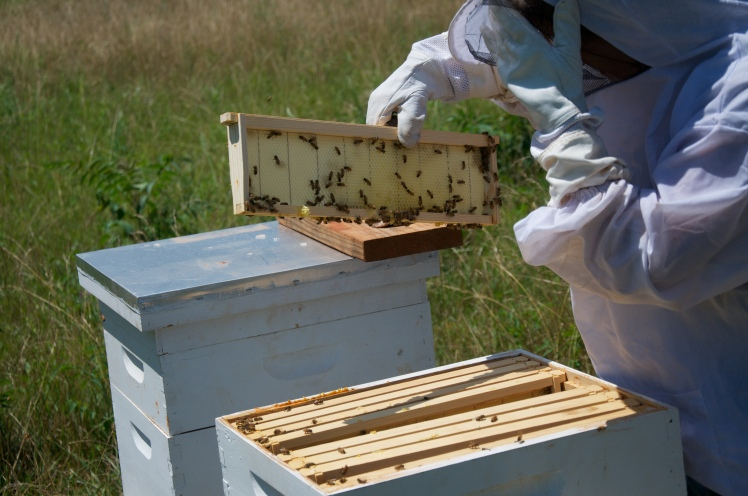 The Bumbling Bee Keepers – Our Thirsty Goose Farm